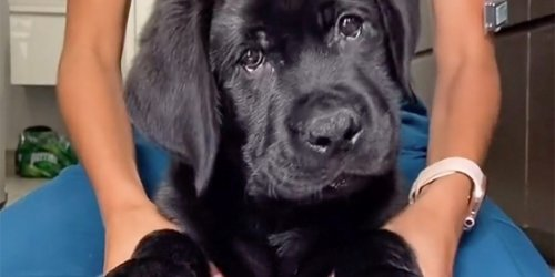 Awwww: 11 of the Cutest Pet Videos We Could Find