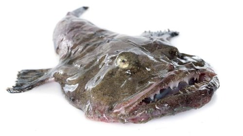 Monkfish May Be Ugly, But They Sure Taste Delicious — Plus Other Seafood Dishes