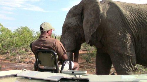 Man Has Close Encounter With Giant Elephant!