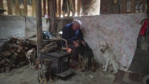 Lebanese Farmer Takes Care of Hundreds of Dogs Amid Country's Financial Crisis
