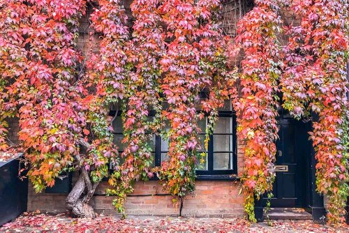 AUTUMN IN LONDON - WHERE TO SEE AUTUMN COLOURS IN LONDON