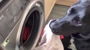This Adorable Dog Loves To Lend a Paw When it Comes to Gardening and Laundry