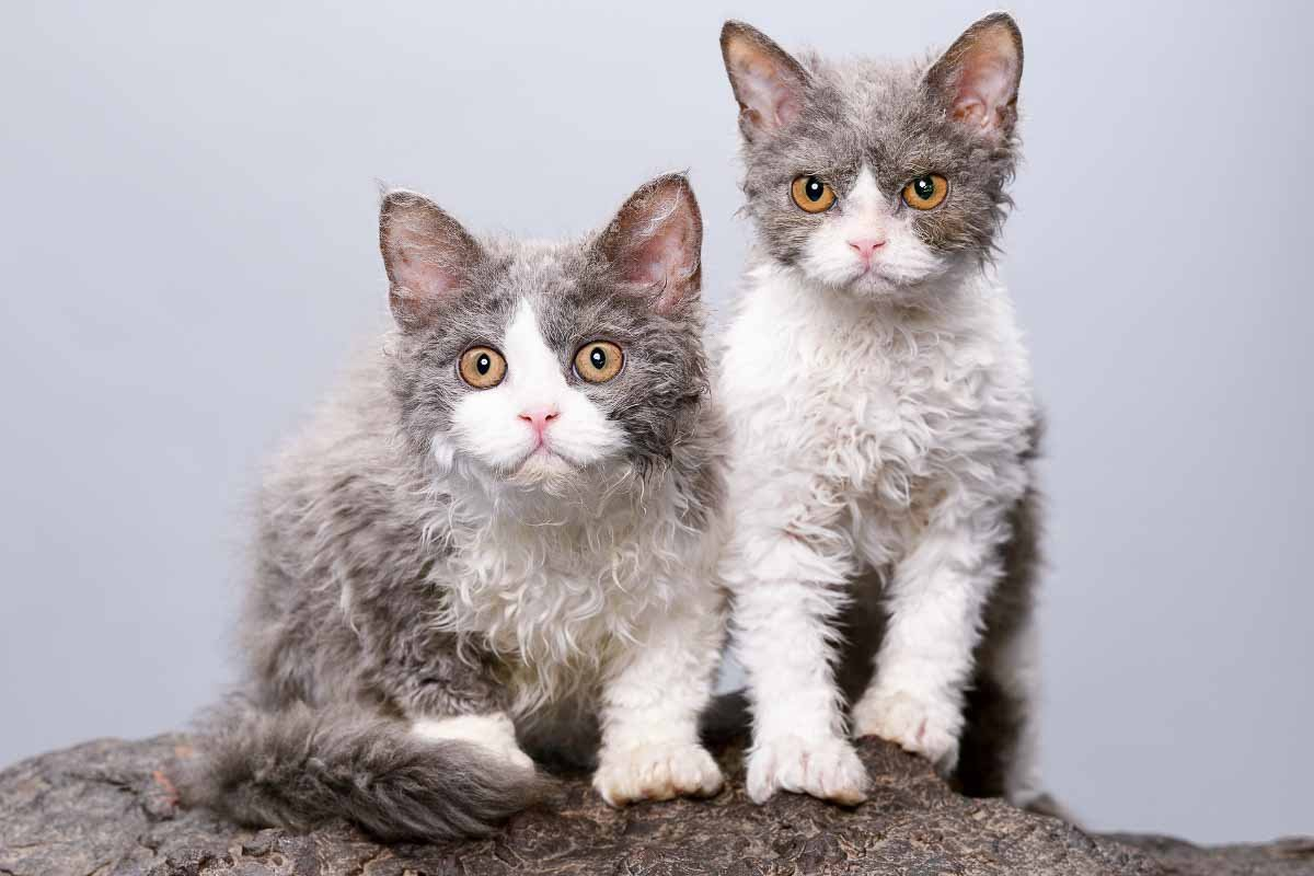 Most Unique Cat Breeds in the World