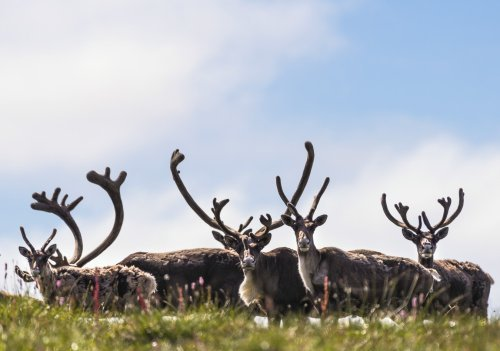 8 Reasons to Visit Canada's Beautiful North