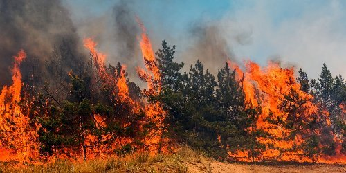 A Massive Wildfire Near Edmonton Has Officials Telling People To Evacuate Immedi