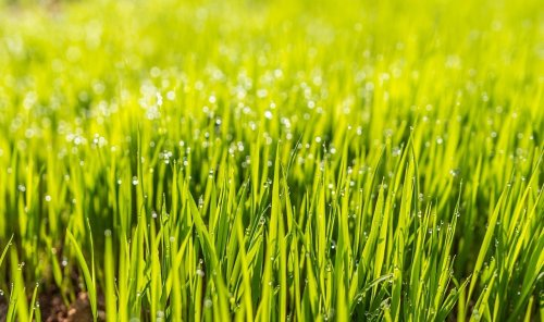 It's time to rip up your lawn