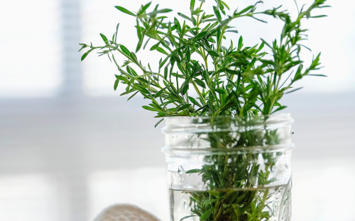 Here's EXACTLY How Long Fresh Herbs Last in the Fridge