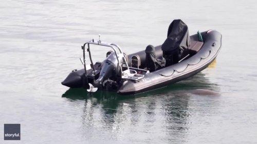Wally the Wandering Walrus Commandeers Inflatable Boat on Irish Coast