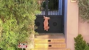 """Beverly Hills Pup Brings """"Happiness, Laughter and Joy"""" Bunny Hopping Her Way to Attention"""