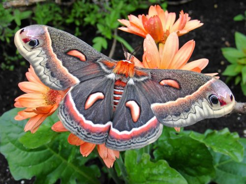 All About Moths