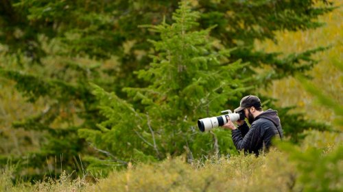 Best Bird Photography Gear for Sony Shooters