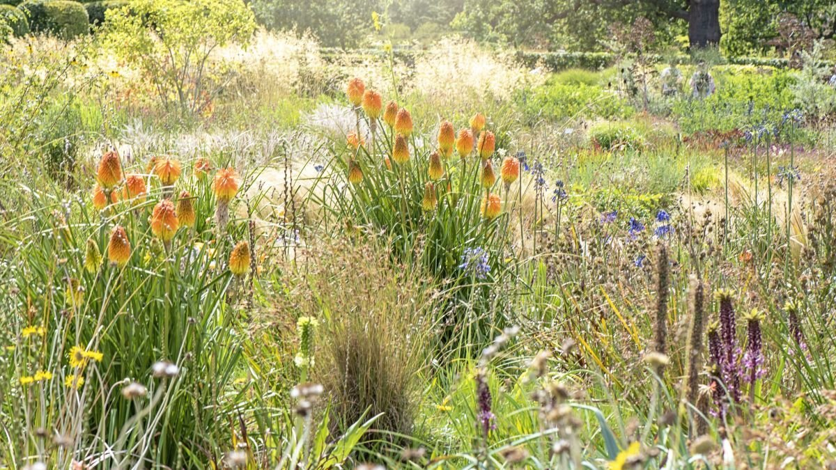 How to keep your garden thriving in the heat