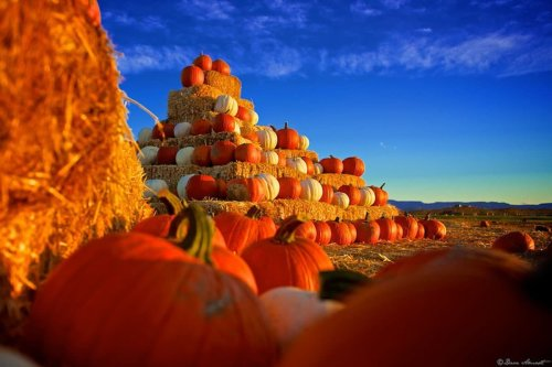 4 Best Places in the USA for Pumpkin Picking this Halloween