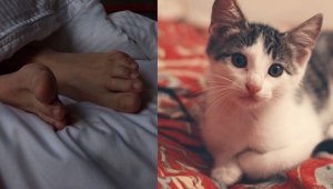 Ever Wonder Why Your Cat Sleeps at Your Feet?