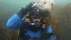 This Amazing Seal Investigates Diver's Headgear!