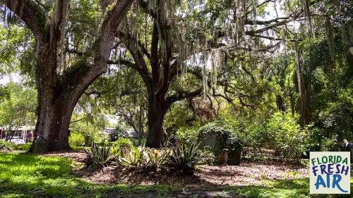 Florida Fresh Air: Dickson Azalea Park