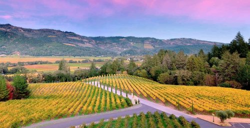 Napa Valley Vs. Sonoma: Which One Is Better According To Your Tastes?