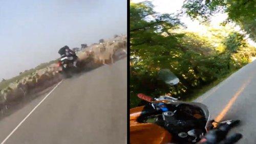Biker Accidentally Plows Into Flock Of Sheep & Sliding Motorcycle Crash