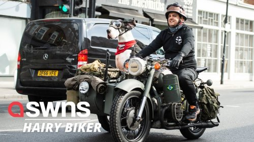 This Great Dane LOVES to ride around in his owner's motorbike sidecar