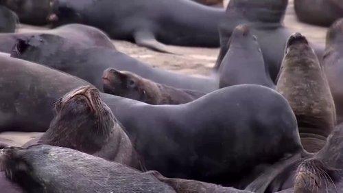 Sea lions invade Chilean town