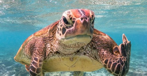 Nine goofy, award-winning animal photos to turn your day around