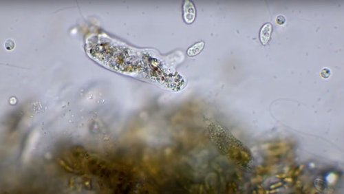 Take A Peek At These Microscopic Shape-Shifters!