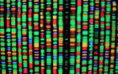 Discover dna profiling