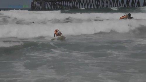 Tillman the Surfing Bulldog