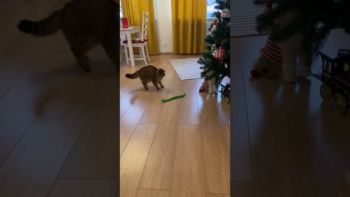 Cat gets scared of toy snake