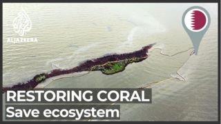 Qatar restoring coral reefs to help save ecosystem