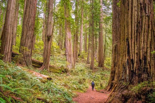 THE MOST BEAUTIFUL STATE PARKS IN CALIFORNIA FOR OUTDOOR ADVENTURES