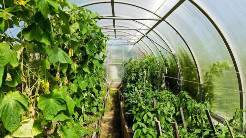 Everything  You Wanted to Know About Greenhouses