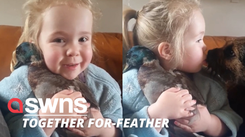 This little girl cuddling her pet DUCK will absolutely melt your heart!