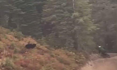 Wild video of black bear chasing mountain biker goes viral
