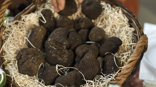 Truffles: The Rarest and Most Expensive Fungi in the World