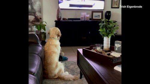 A four-legged fan engrossed in Tokyo 2020 Olympics