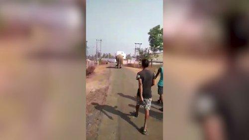 Wild Elephant Wreaks Havoc at Village in Eastern India