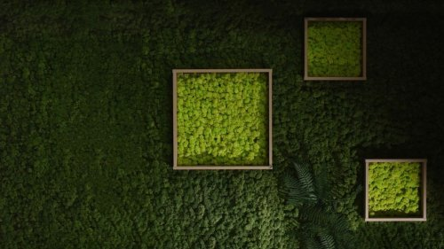 Interior Design With Moss Art