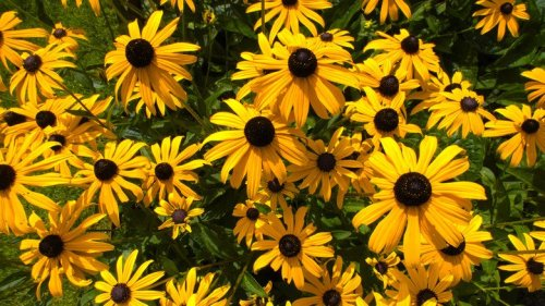 15 Plants With Yellow Flowers You'll Love In Your Flower Garden
