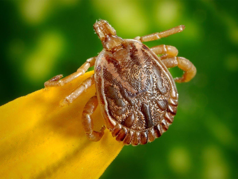 Say goodbye to bugs and ticks