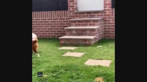 Fl-utterly Heartbreaking: Dog Eats Butterfly Immediately After Kid Sets It Free
