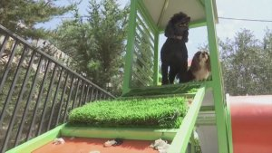Lap of Luxury! Doggy Hotel Opens in Palestine to Cater To Four-Legged Friends!