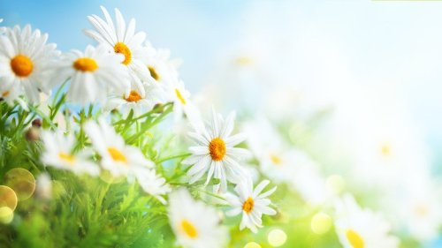 15 Types Of Daisies That Will Look Perfect In Your Flower Garden