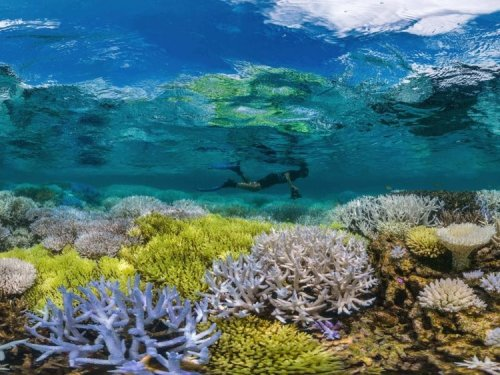 Sustainable Sea Life and Oceans