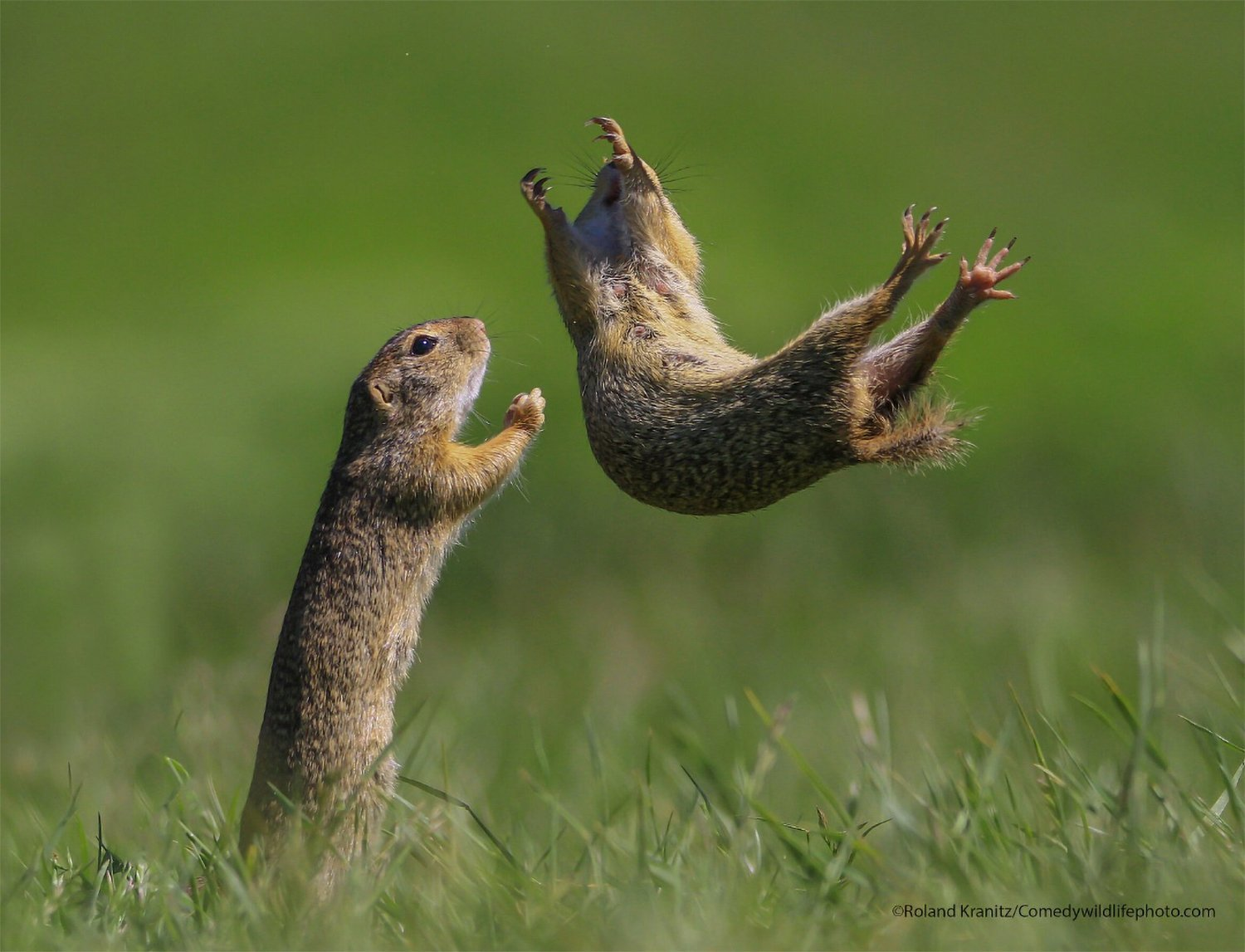 19 Hilarious Finalists in the 2021 Comedy Wildlife Photo Awards