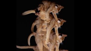 Cats Always Land on Their Feet! There's Actually Science Behind That