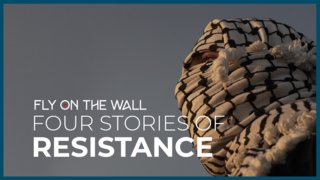 Four Stories of Resistance I Fly On The Wall