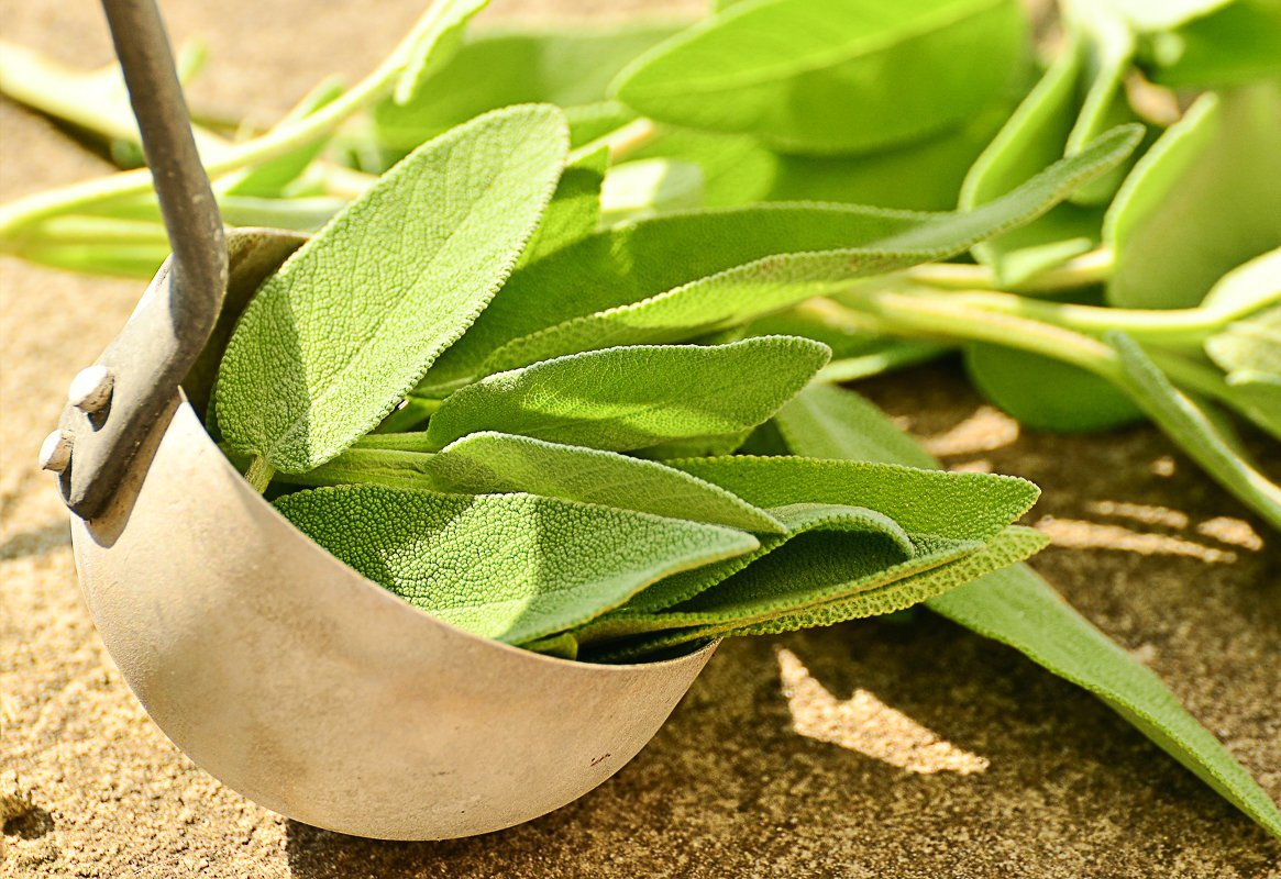 Essential Herbs to Grow Easily At Home