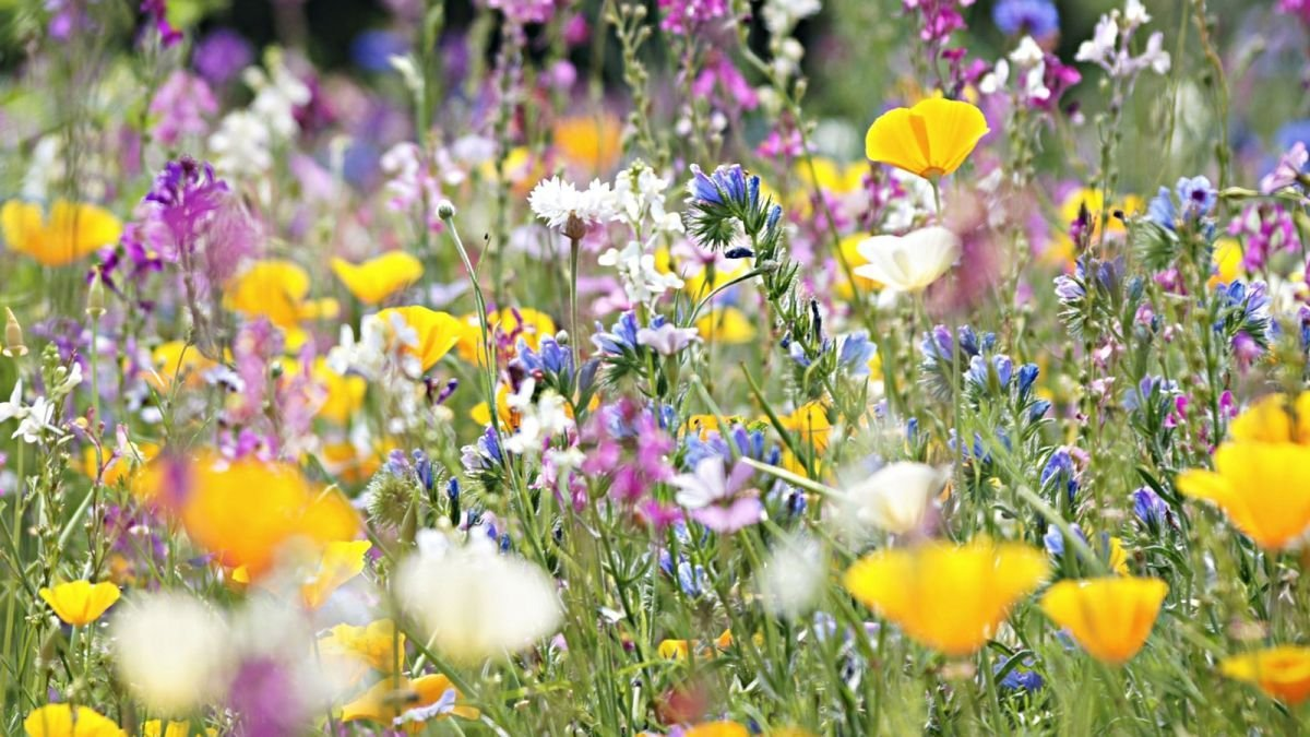 Celebrate World Bee Day 2021 with these buzz friendly garden tips