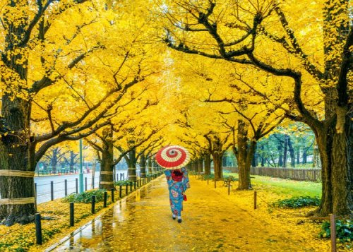 Tokyo's Fantastic Fall Traditions
